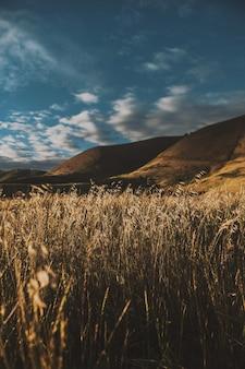息を呑むような空の下の美しい山のフィールドの垂直ショット