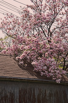 Вертикальный снимок красивого дерева с розовыми цветками сакуры возле здания