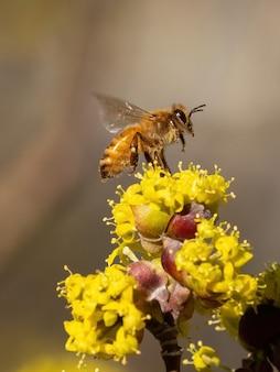 자연 속에서 하얀 꽃을 피우는 벌의 세로 샷