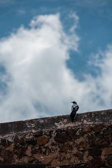 曇った青い空とコンクリートの壁に休んでいる鳥の垂直ショット