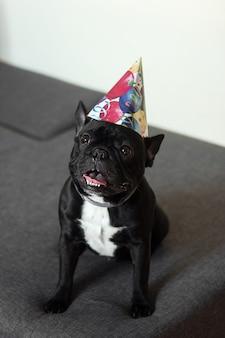 Вертикальный снимок черного французского бульдога в шляпе на день рождения на диване