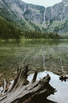 森と山の近くの雪崩湖で壊れた木の垂直方向のショット