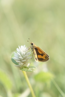 Вертикальный снимок бабочки на цветке с размытым
