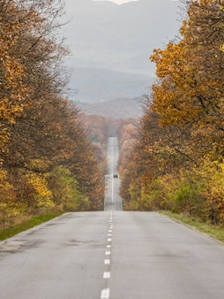 秋の森を走る車の縦のショット