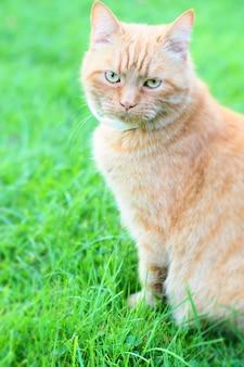 緑の芝生に座っている猫の垂直ショット