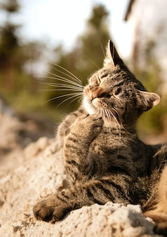 目を閉じた猫の縦のショット