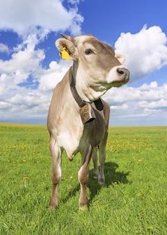 晴れた日に撮影された草で覆われた牧草地で放牧されている牛の垂直ショット