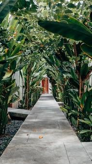 Вертикальный снимок бетонной дорожки с зелеными растениями по бокам