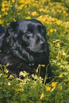 Вертикальный снимок милой черной собаки, лежащей на желтых цветах