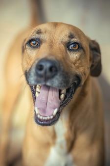 Вертикальный снимок милой коричневой собаки