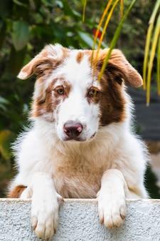 Вертикальный снимок милой собаки колли, опирающейся на бордюр