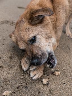 모래에 누워 귀여운 강아지의 세로 샷