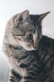 귀여운 작은 국내 새끼 고양이의 세로 샷