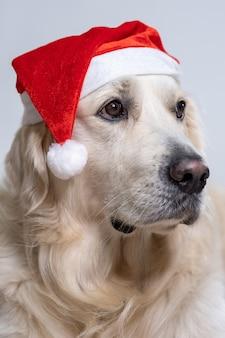 Вертикальный снимок милого ретривера в рождественской шапке