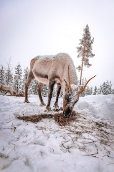 Вертикальный снимок оленя в снежном лесу зимой