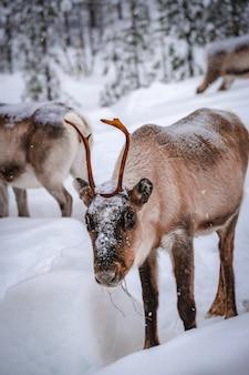 冬の雪に覆われた森の鹿の垂直ショット