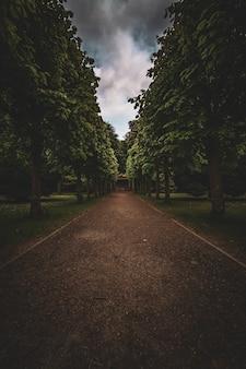 흐린 날에 진드기 나무가 늘어선 황량한 경로의 세로 샷