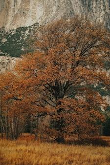 Вертикальный снимок поля с красивым высоким деревом и огромной скалой