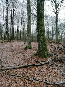 ノルウェー、ラルヴィークの高層樹木でいっぱいの森の垂直ショット