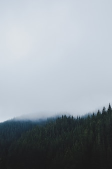 안개가 하루에 숲의 세로 샷