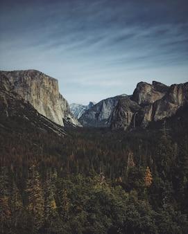 Вертикальный снимок леса в горах в национальном парке йосемити