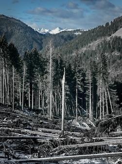 Dolomites의 높은 산으로 둘러싸인 전나무가 많은 숲의 세로 샷