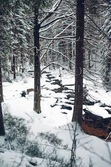 雪に覆われた背の高い木と森の垂直ショット