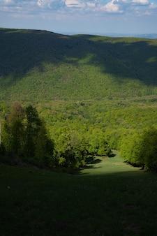 森の垂直ショット