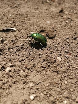 Вертикальный снимок зеленого металлического жука, идущего по земле