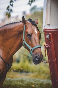 Вертикальный снимок лошади