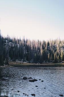 Вертикальный снимок озера в окружении леса