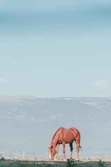 목초지에 방목하는 외로운 갈색 말의 세로 샷