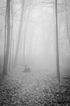 안개에 둘러싸인 숲의 신비한 섬뜩한 풍경의 세로 샷-공포 개념