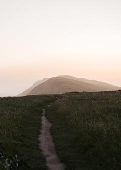 Вертикальный снимок дорожки посреди поля, покрытого зеленью, на солнце