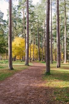 森の背の高い木の真ん中にある小道の垂直ショット