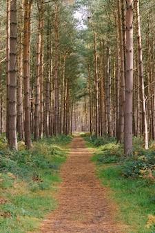 숲의 키 큰 나무 한가운데에 있는 통로의 수직 샷