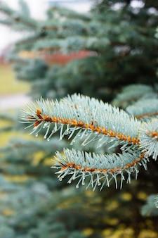 水滴と松の木の枝の垂直ショット