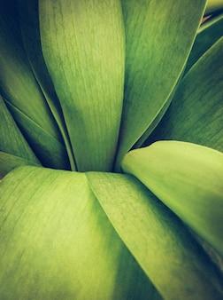 長い緑の葉を持つ植物の垂直ショット