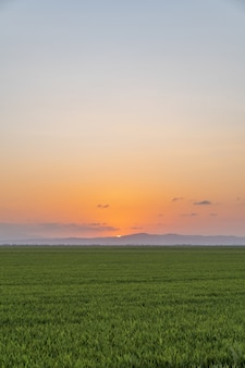 スペイン、バレンシア、アルブフェラで日没時に撮影された水田の垂直ショット