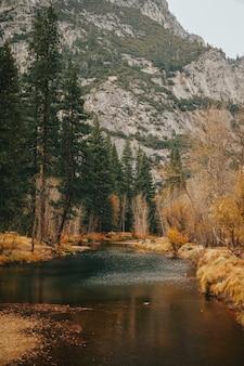 背の高い木々と岩山のある川の垂直ショット