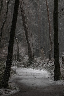 冬の雪に覆われた道路と木々の垂直ショット
