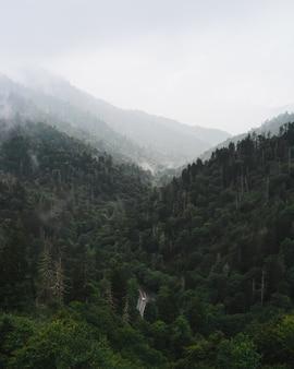 Вертикальный снимок дороги посреди горного леса под туманным небом