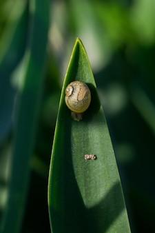 Вертикальный снимок круглой наземной улитки на кончике большого листа