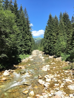 整列した緑の木々の中で岩を流れる浅い川の垂直ショット