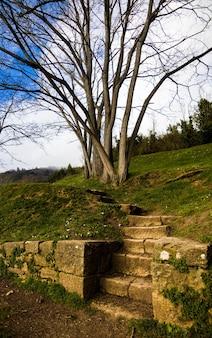 Вертикальный снимок лестницы на холм возле безлистного дерева
