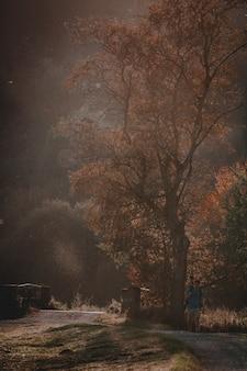 通路を歩く男と夕日の風景の垂直ショット