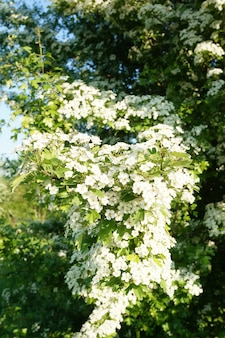 흰색 꽃과 키 큰 관목의 세로 샷