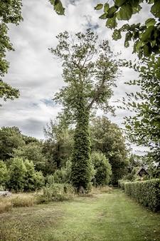 周りに植物が生えている背の高い木の垂直ショット