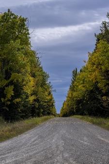 カナダ、アルバータ州クリアウォーターの森を通るトレイルの垂直ショット