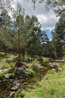 松の木と緑の牧草地の間を斜めに曇り空と流れる透明な川の垂直ショット